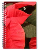 Up Close And Personal Poinsettia  Spiral Notebook