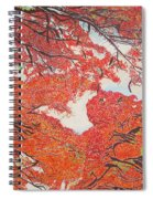 Up Close Flamboyant Spiral Notebook