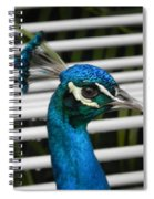 Up Close Peacock Spiral Notebook