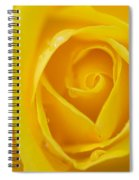 Up Close Yellow Rose Spiral Notebook