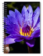 Upbeat Violet Elegance - The Beauty Of Waterlilies  Spiral Notebook