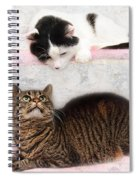 Upstairs Downstairs With Emmy And Pepper Spiral Notebook