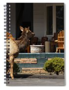 Urban Elk Spiral Notebook