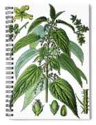 Urtica Dioica, Often Called Common Nettle Or Stinging Nettle Spiral Notebook