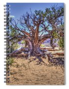 Utah Juniper On The Climb To Delicate Arch Arches National Park Spiral Notebook