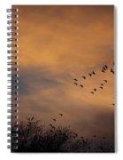 V Formation At Sunset  Spiral Notebook