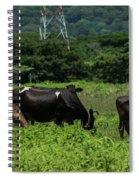 Vacas De Ahuachapan 2 Spiral Notebook