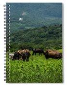 Vacas De Ahuachapan Spiral Notebook