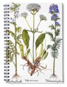 Valerian Flowers, 1613 Spiral Notebook