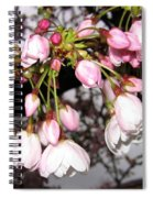Vancouver Cherry Blossoms Spiral Notebook
