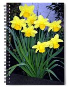 Vancouver Daffodils Spiral Notebook
