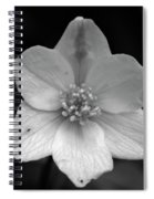 Vanishing Beauty 3 Spiral Notebook
