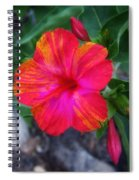 Variegated 4 O'clock Spiral Notebook