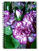 Variegated Carnations Spiral Notebook