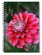 Variegated Colored Dahlia Spiral Notebook