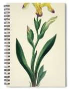Variegated Iris Spiral Notebook