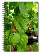 Vegetable Growing In Used Water Bottle 10 Spiral Notebook