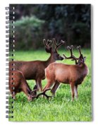 Velvet Antlers In The Sunset Spiral Notebook