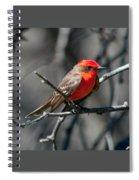 Vermilion Flycatcher Spiral Notebook