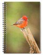 Vermilion Flycatcher Facing Camera On Tree Stump Spiral Notebook
