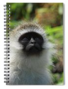 Vervet Monkey Spiral Notebook