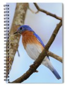 Very Bright Young Eastern Bluebird Perched On A Branch Colorful Spiral Notebook