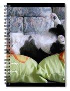 Very Corpulent Mz Kitterz Spiral Notebook