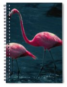 Very Pink Flamingos Spiral Notebook