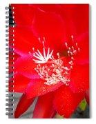 Vibrant Cacti Spiral Notebook