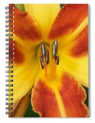 Vibrant Lilly Spiral Notebook