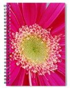 Vibrant Pink Gerber Daisy Spiral Notebook