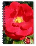 Vibrant Red Rose Spiral Notebook