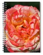 Vibrant Two Toned Rose Spiral Notebook