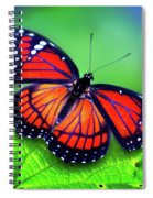 Viceroy Perch Spiral Notebook