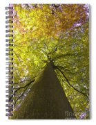 View To The Top Of Beech Tree Spiral Notebook
