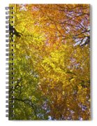View To The Top Of Beech Trees Spiral Notebook