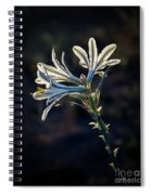 Vignetted Ajo Lily Spiral Notebook