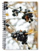 Vignettes - Indigo Winter Berries Spiral Notebook