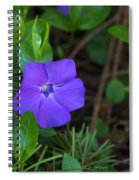 Vinca Blooming In The Forest Spiral Notebook
