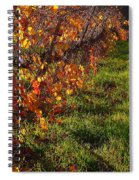 Vineyard 13 Spiral Notebook