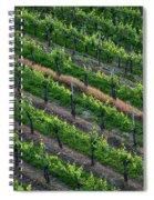 Vineyard Rows - Slovenia Spiral Notebook
