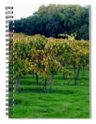 Vineyards In California Spiral Notebook