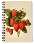 Vintage Strawberries Spiral Notebook