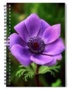 Violet Anemone Spiral Notebook