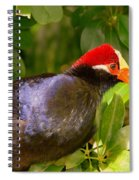 Violet Plantain Eater Spiral Notebook