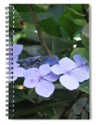 Violets O The Green Spiral Notebook