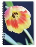 Virgin Beauty Spiral Notebook