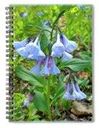 Virginia Bluebells - Mertensia Virginica Spiral Notebook