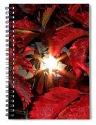 Virginia Creeper Sunburst 2 Spiral Notebook
