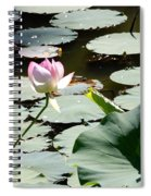 Visit To Lilly Pond Spiral Notebook